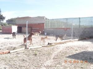 Refuge Motilla Del Plancar (24)