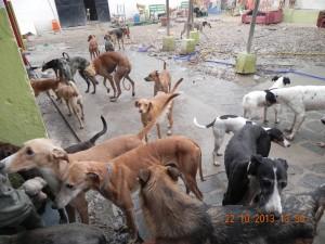 Refuge Nuria à Cordoba (19)