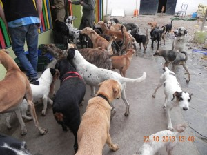 Refuge Nuria à Cordoba (24)