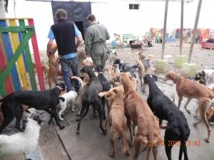 Refuge Nuria à Cordoba (27)
