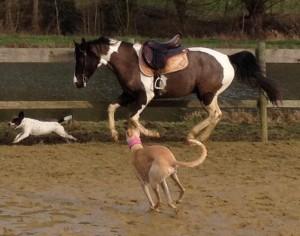 musa même pas peur des chevaux