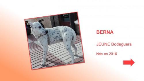 BERNA01