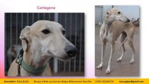 cartagena04