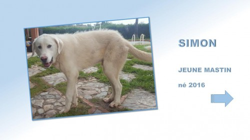 simon01