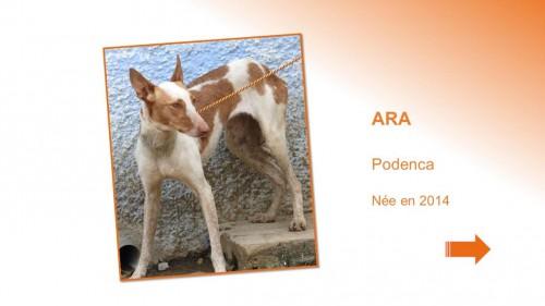 ARA01