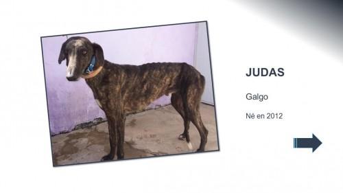 JUDA01