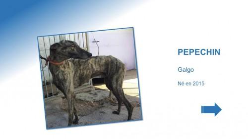 PEPECHIN01