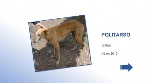 POLITARSO01