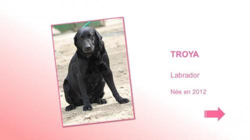 TROYA01