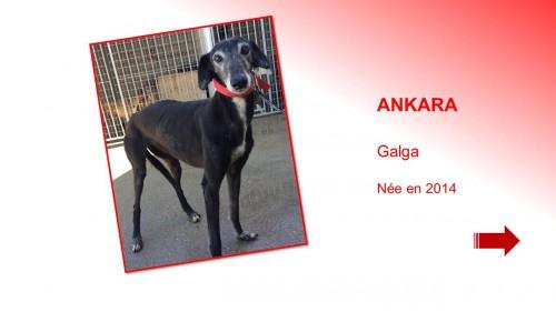 ankara01