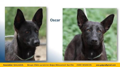 oscar03