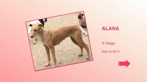 ALANA01