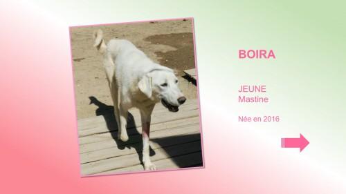 BOIRA01