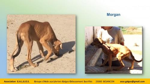 MORGAN03
