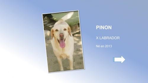 PINON01