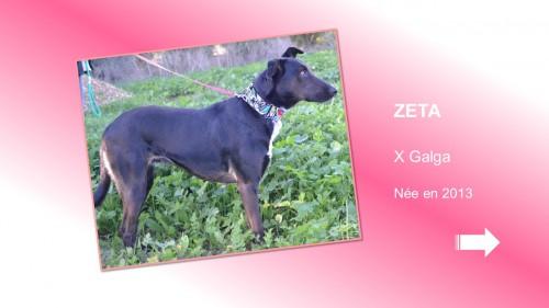 ZETA01